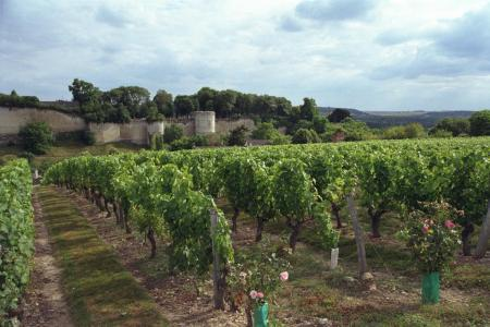 Val de Loire<br><b>Extension de l'aire d'appellation Chinon</b>