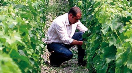 Bordeaux Sciences Agro<br><b>Terroir and Vineyard Management</b>