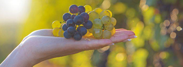 Beaune<br><b>BSB organise la première European Wine Business Summer School</b>
